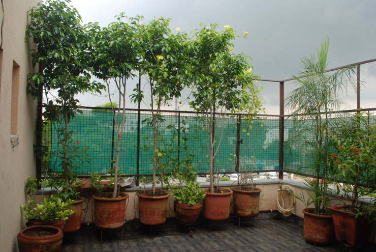 Service apartment delhi 2bhk furnished service apartment for Plants for apartment balcony